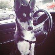 Sparki_Dog