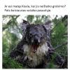 Tipo Koala po neišlaikyto grobimo